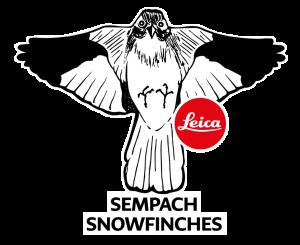 Leica Sempach Snowfinches
