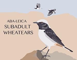 SubadultWheatears_Logo
