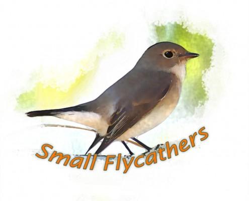 Logo flycatchers