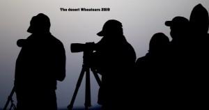 Desert Wheatears 2019