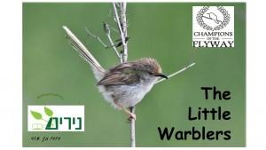 Little Warblers