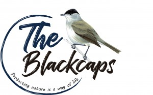 לוגו שחורי כיפה